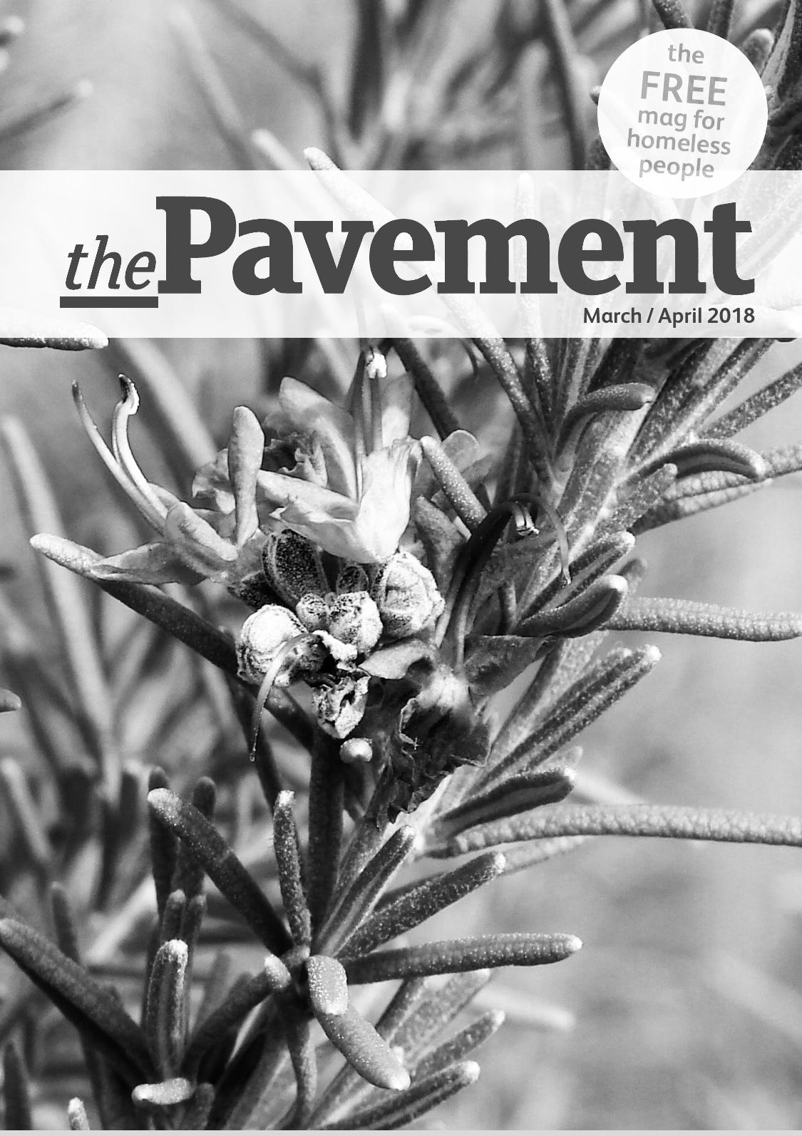 Front cover of the Pavement suicide edition